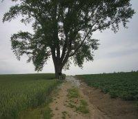 哲学の木、よーく見ると根元に立っています