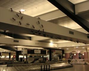 アトランタ空港のアリ